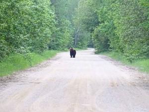 Medved-Naliboki