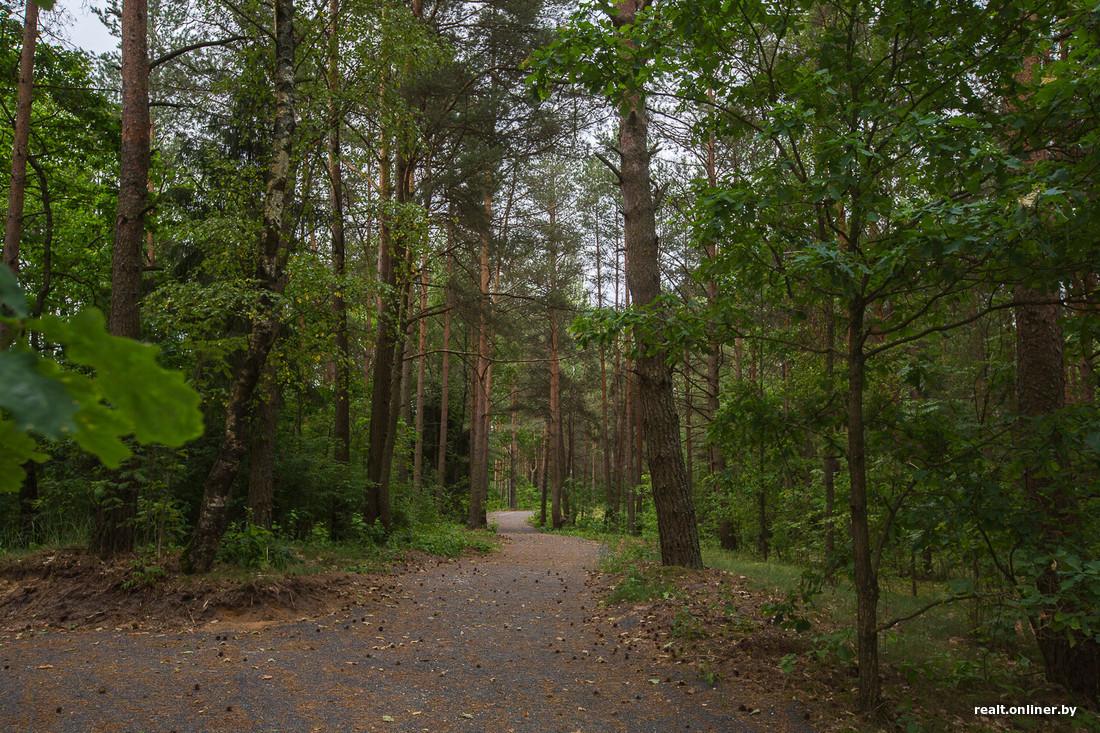 На EuroVelo-2: Отдых по-белорусски. Веломаршрут для выносливых — чем заняться в Налибокской пуще
